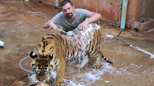 muž praní tygr