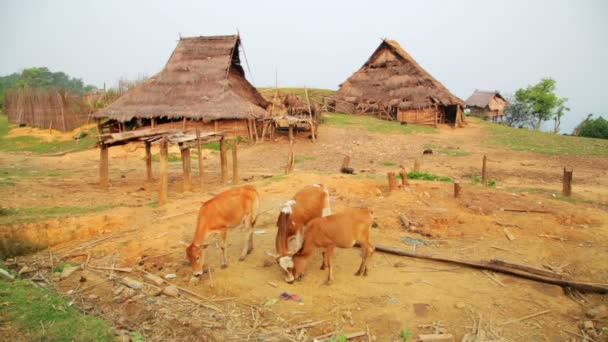 Tribal culture of Akha tribe village
