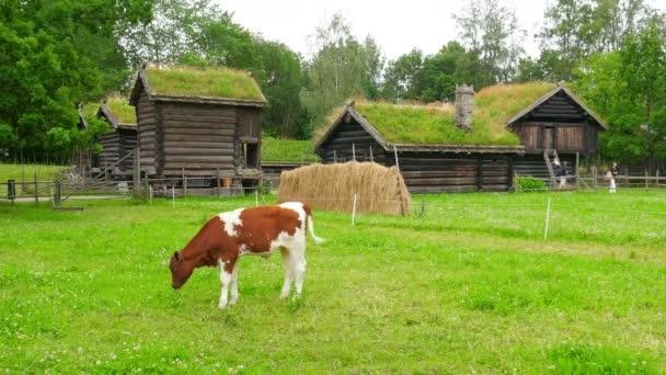 Chov zvířat v norwagian vesnici