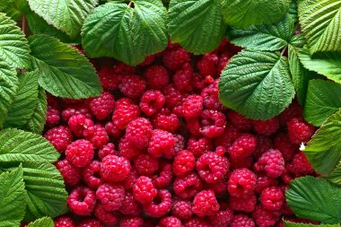 raspberries and green leaves