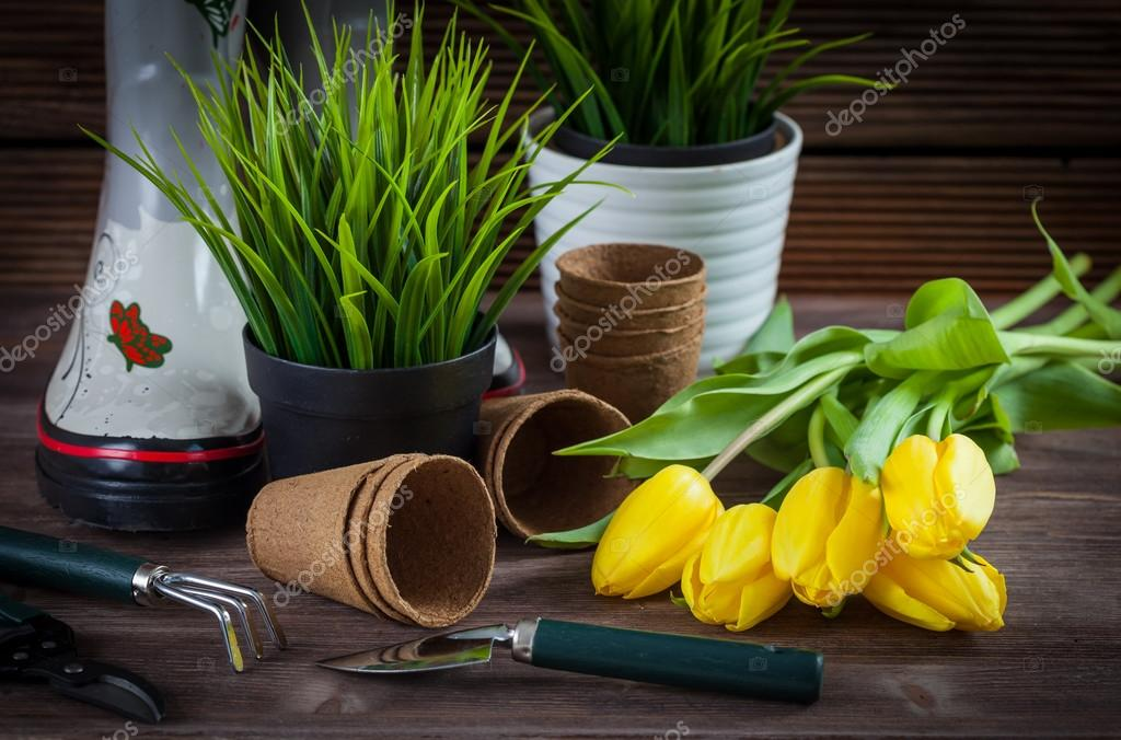 Gardening - plants and garden tools