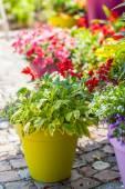 Photo Flower pots