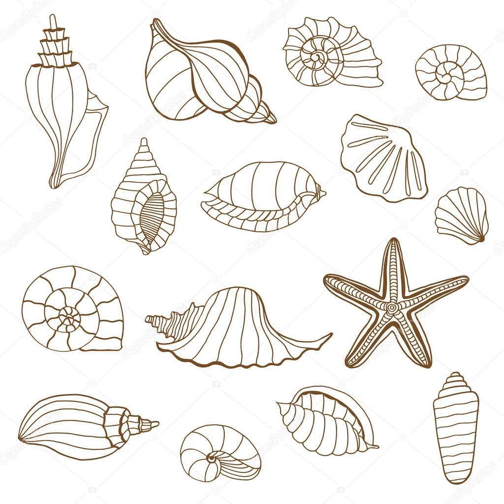 Deniz Kabukları Kahverengi Ve Beyaz Stok Vektör Frescomovie