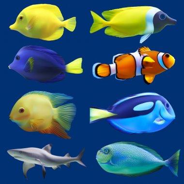Set of tropical fish. Vector illustration