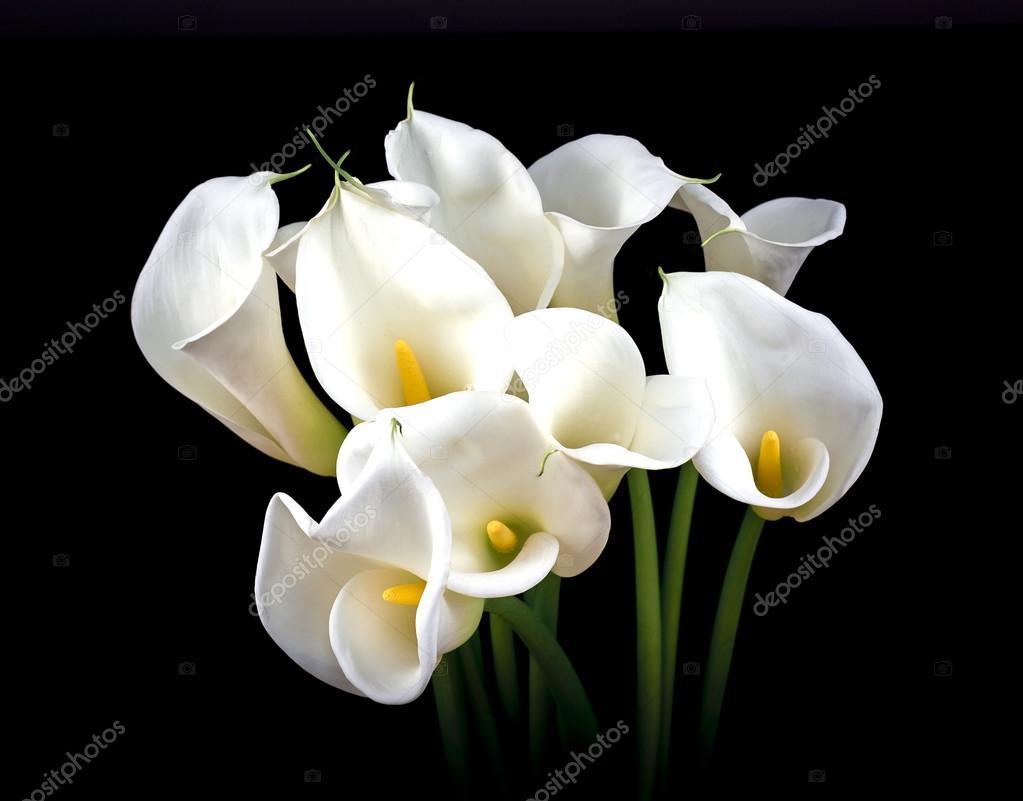Flores Alcatraces Blancos Ramo De Flores De Lirio Blanco Foto De