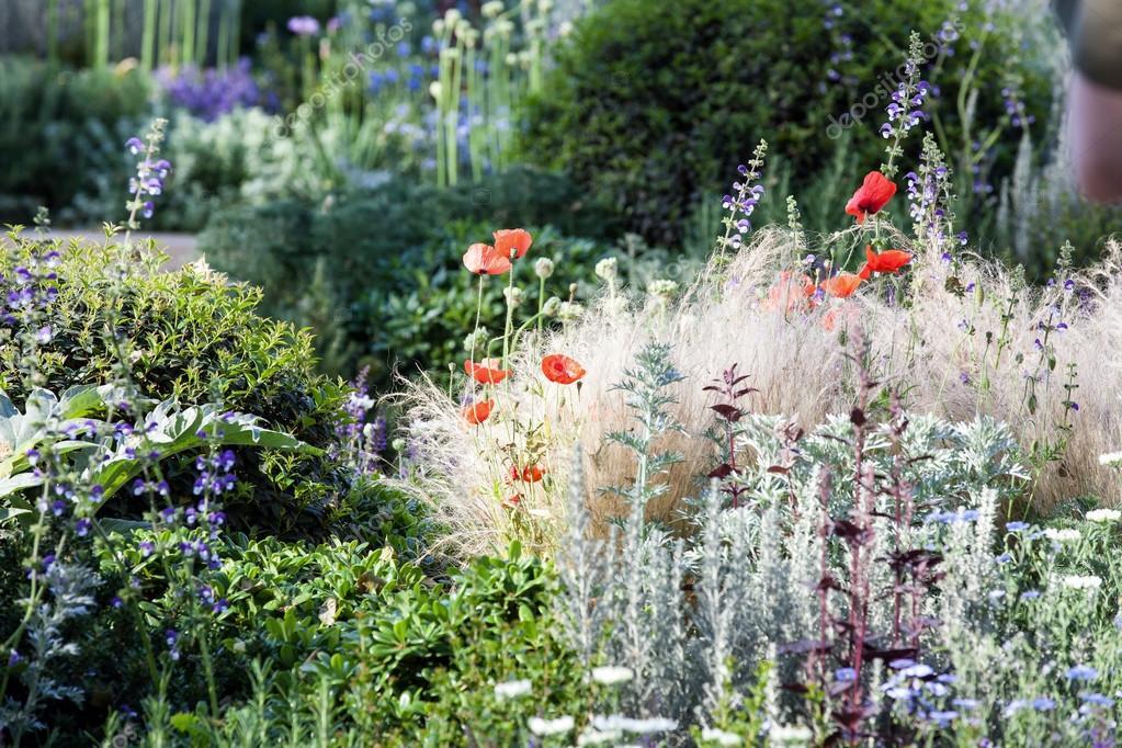 Poppies in a summer flower garden