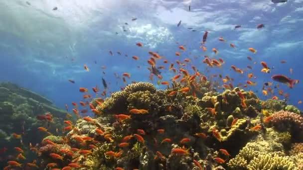 Korálové ryby v moři