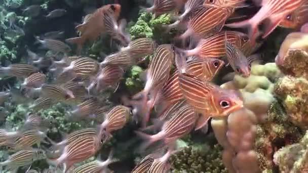 Mělké korálové ryby