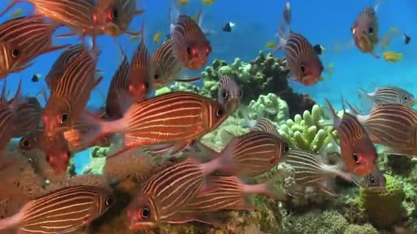Coral fishes shoal