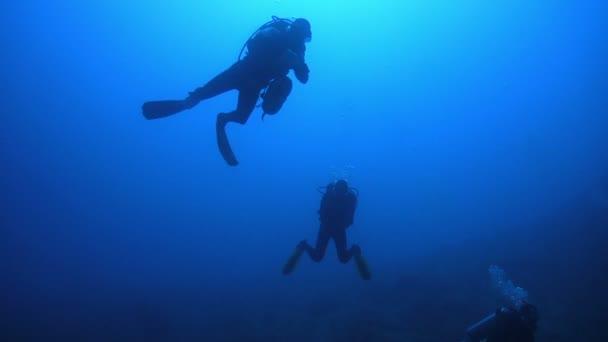 Divers swimming in sea