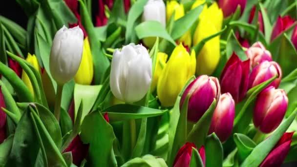 Kytice tulipánů světlé květy