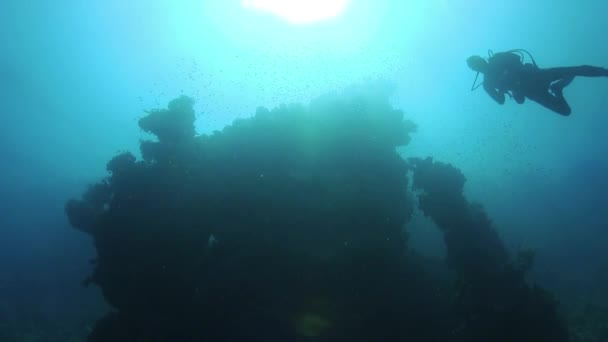Diver Swims over Coral Reefs