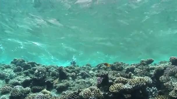 Meereswellen über dem Korallenriff