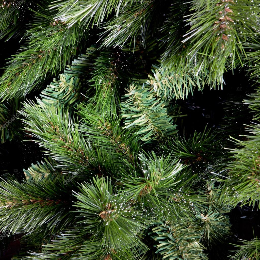 green branches of fir-tree