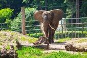 Fotografie slon africký