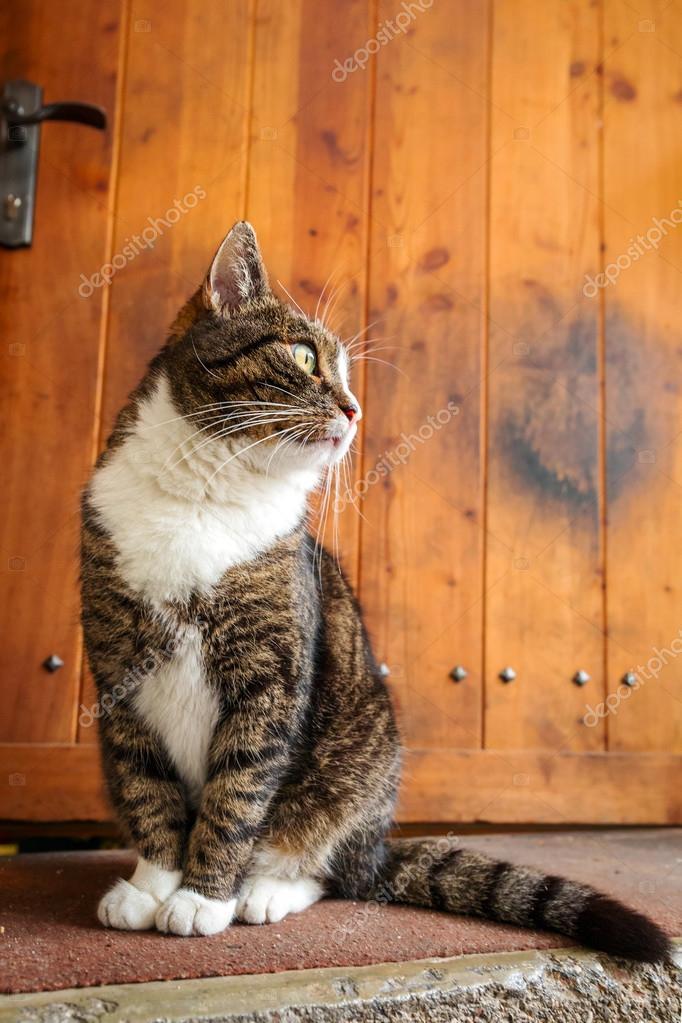 Cat at the doors