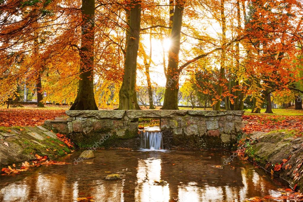 Creek in the autumnal park