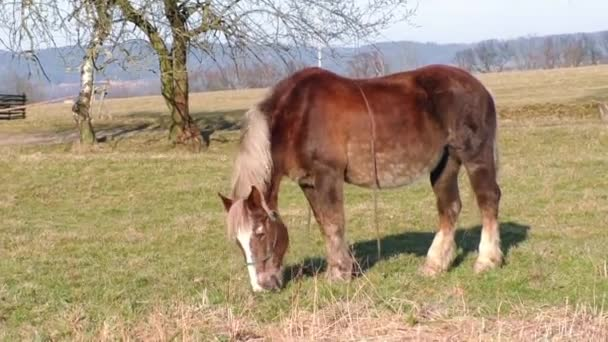 Brown horse in the meadow