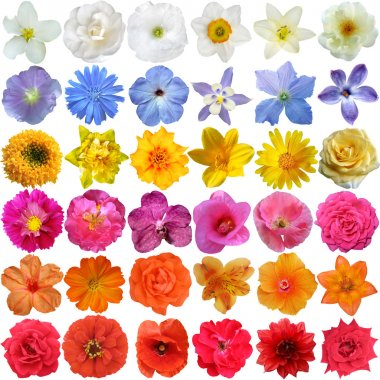 Big Selection of Various Flowers Isolated on White Background stock vector