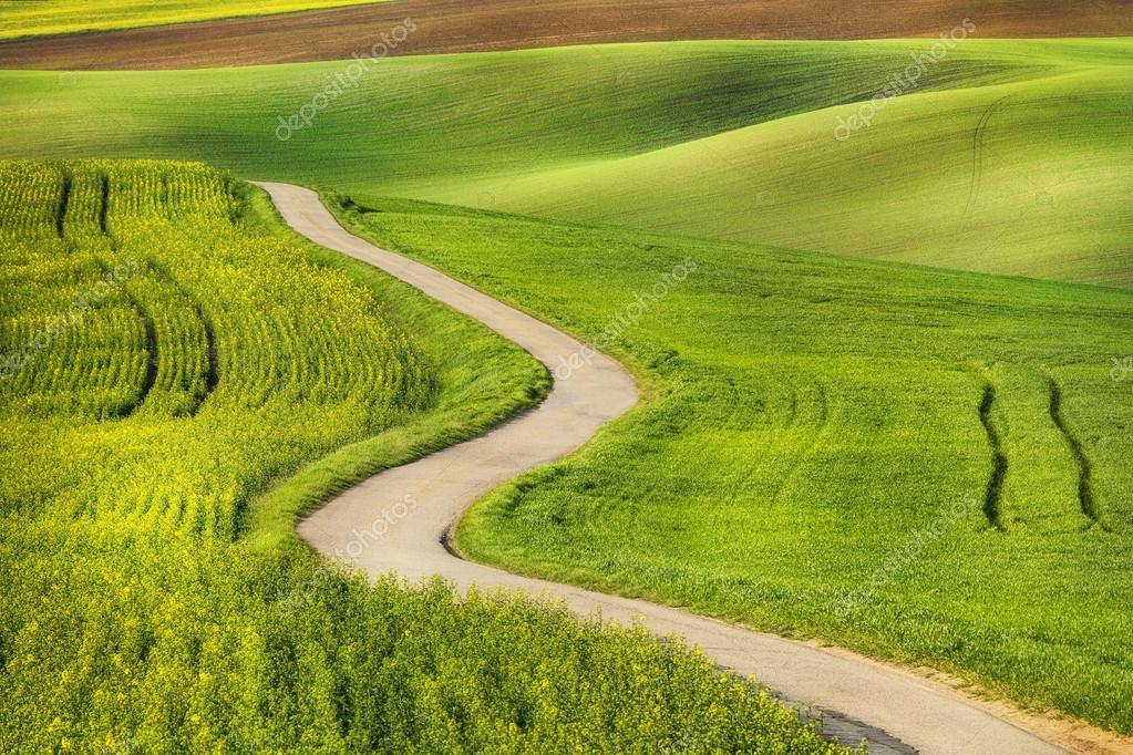 Road in the green field waves