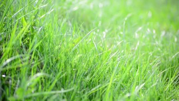 ragyogó tavaszi füvet a szél