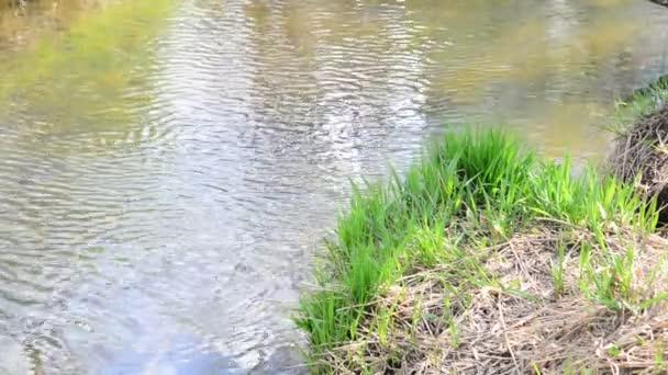 Malá řeka v letním dni