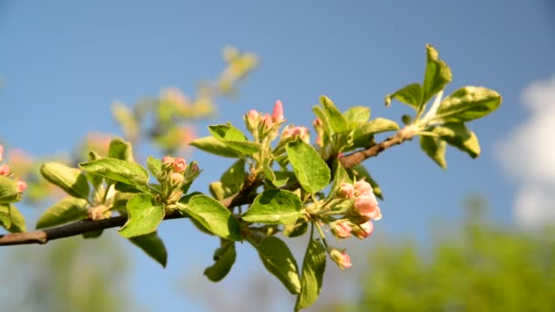 Sprig of apple blossom on  background of  sky