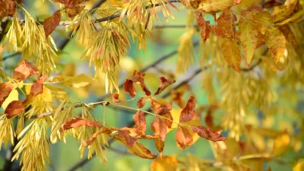 Zavřít z popela žluté listí na podzim