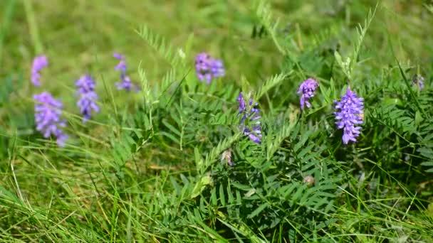 Kytice na trávníku v létě
