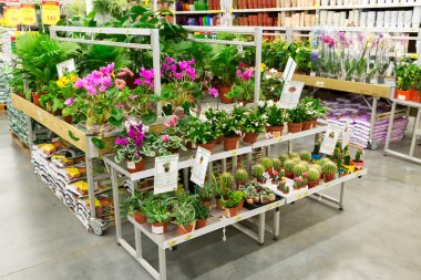 MOSCOW, RUSSIA - FEBRUARY 15, 2015: Potted plants in the store Leroy Merlin. Leroy Merlin is a French home-improvement and gardening retailer serving thirteen countries
