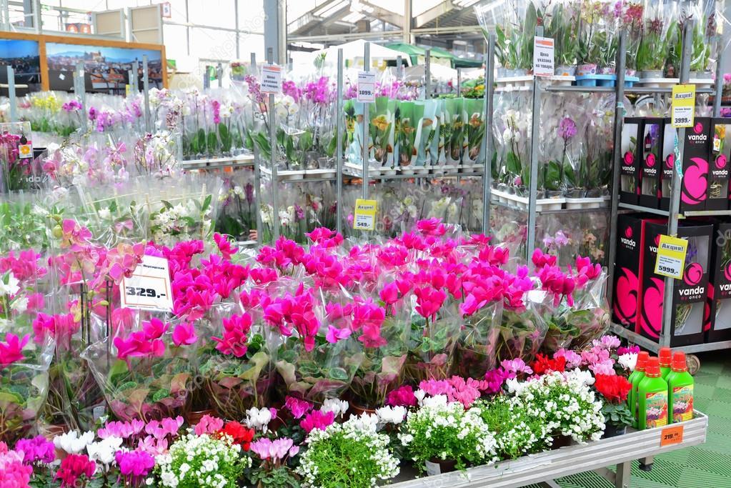 Ашан сад и огород каталог