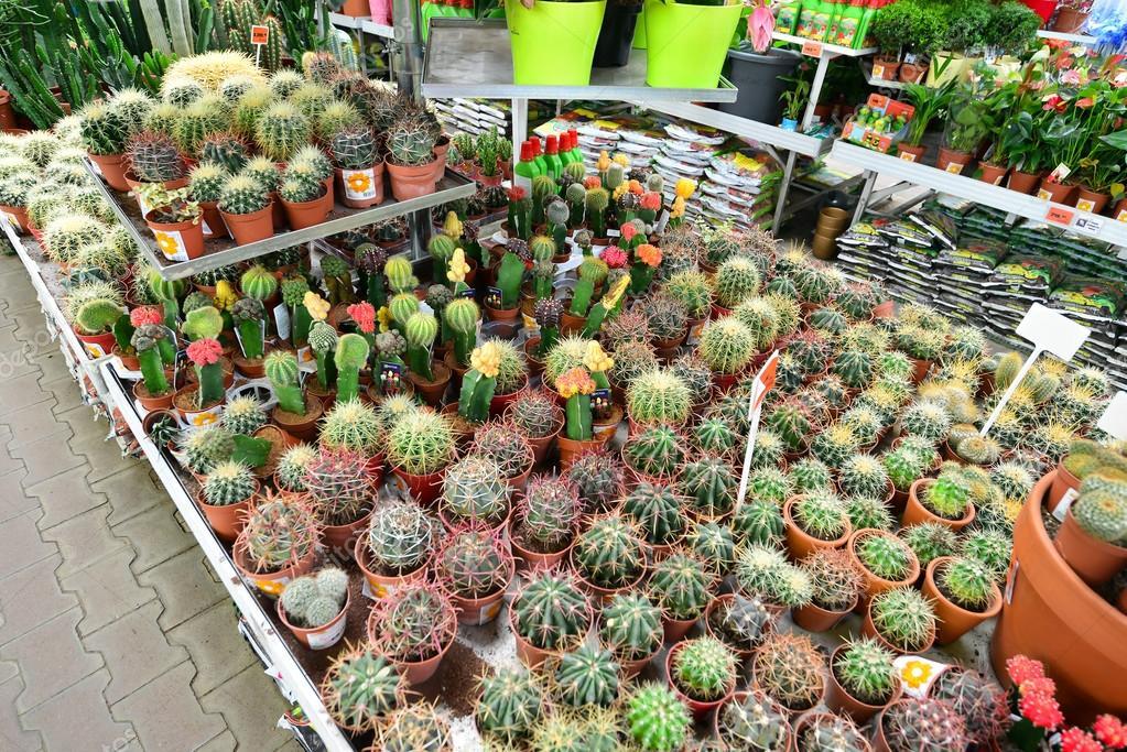 Einzigartig Blumen in Obi-Shop Moskau Russia.y — Redaktionelles Stockfoto  NF07