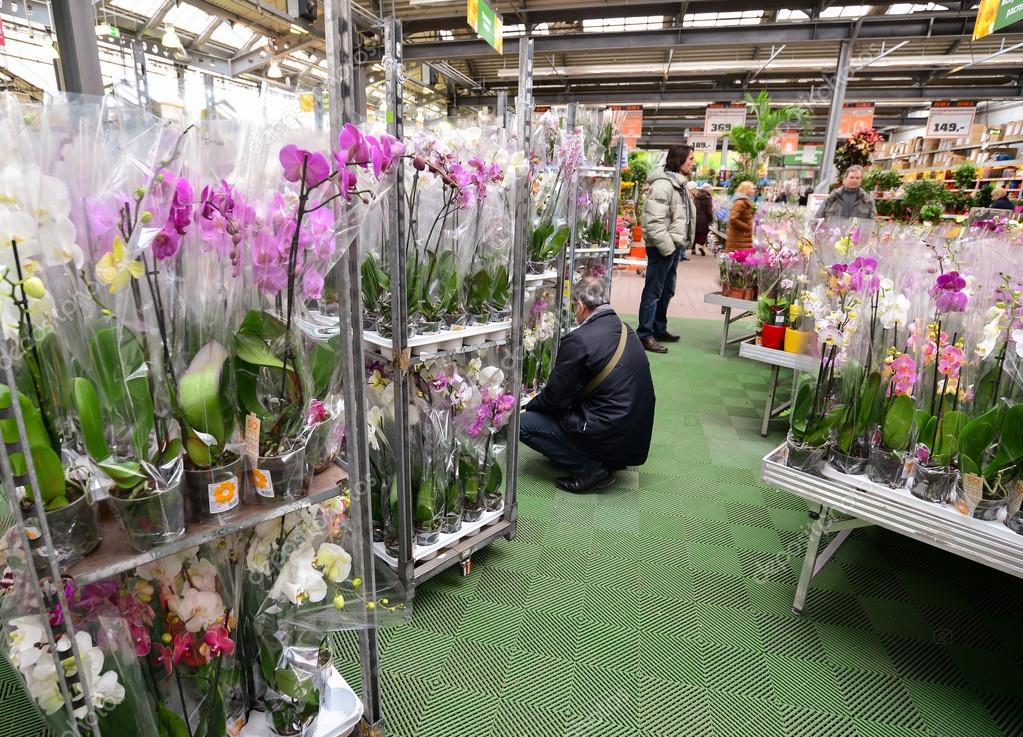 Роз, цветы в магазин ашан новосибирске