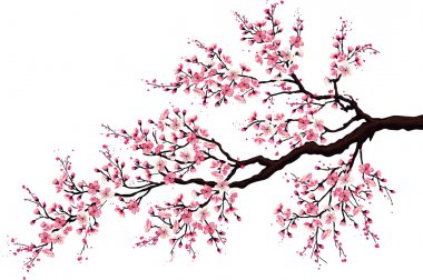 Branch of a blossoming cherry tree isolated on a white background stock vector