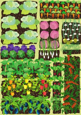 Overhead view on vegetable garden with different vegetables stock vector