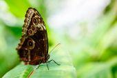 Butterfly outdoor on flower