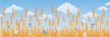 Field of ripe wheat ears