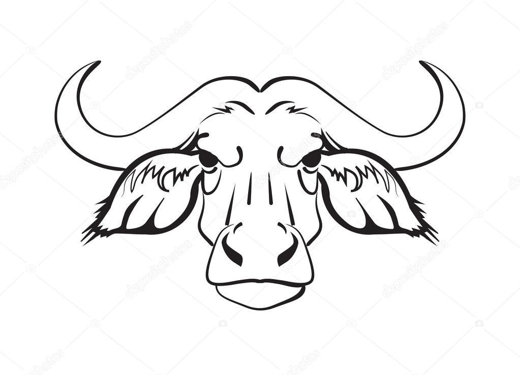 Cara de bufalo para colorear   cabeza de búfalo africano — Vector de ...