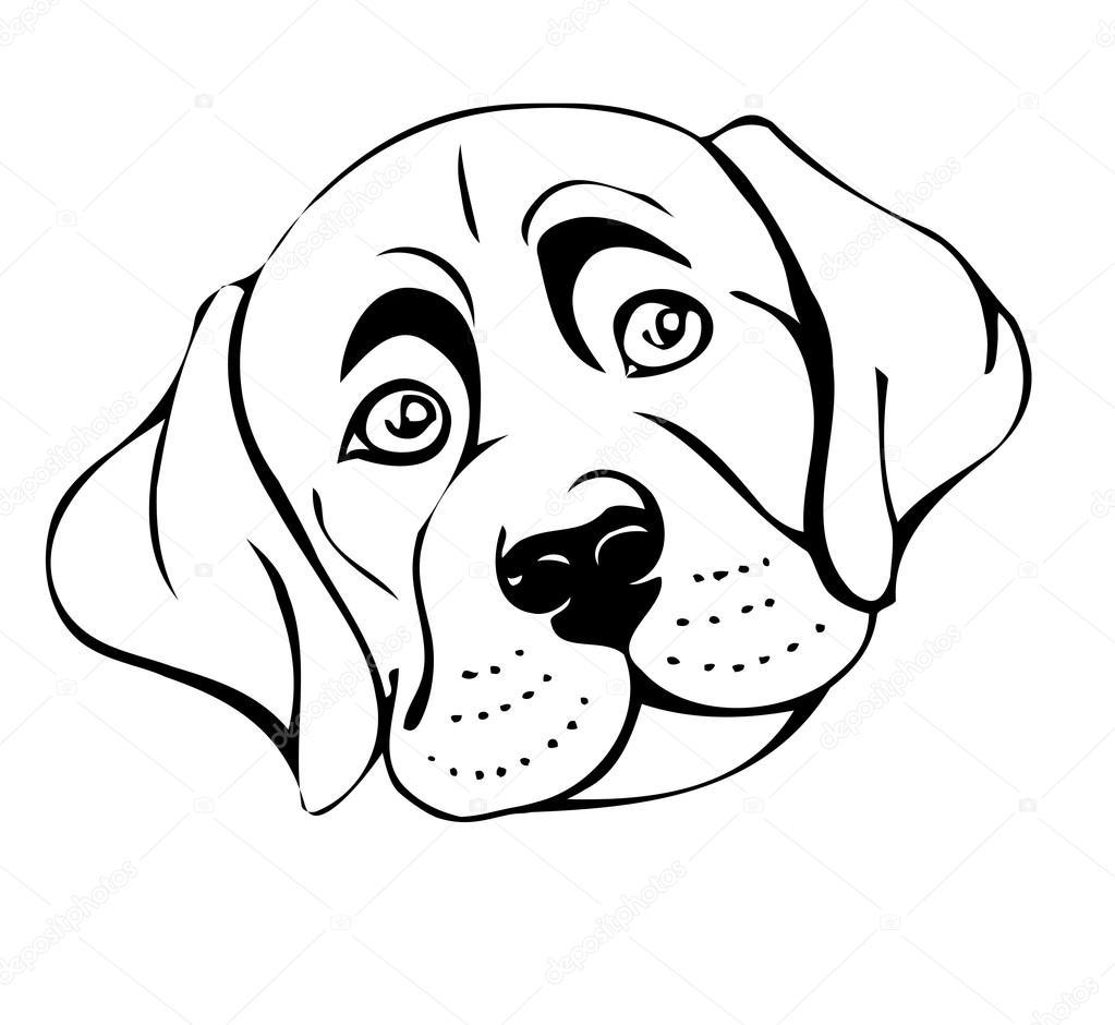 Фото собак мясоедов позы