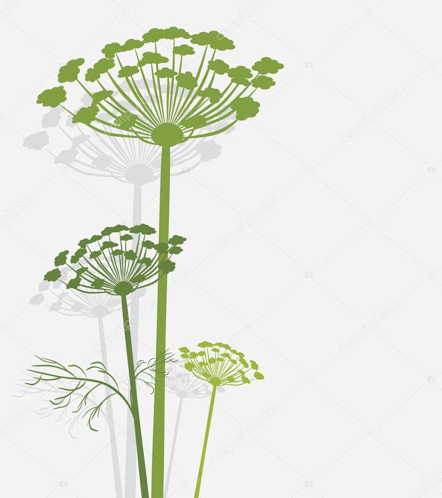 Silhouette of blooming fennel