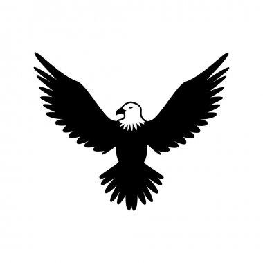hawk eagle animal