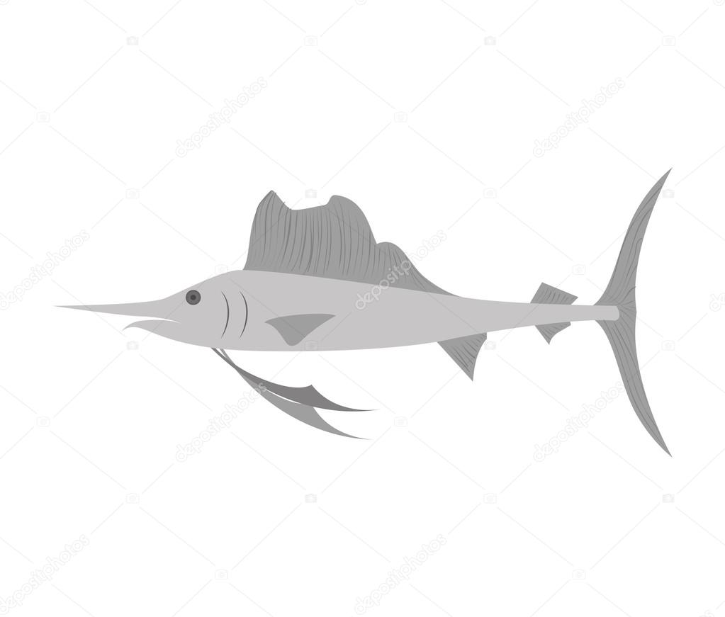 swordfish water animal