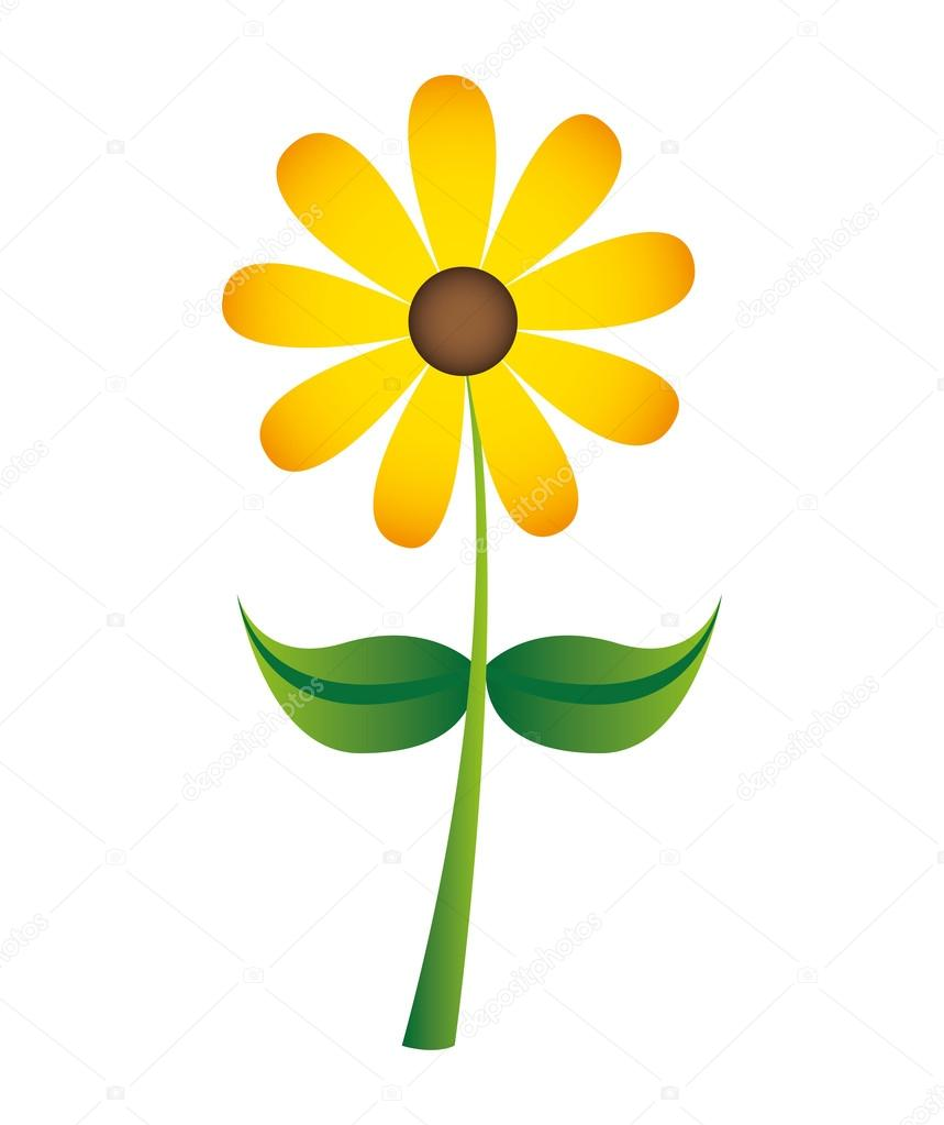 beautiful flower drawing isolated