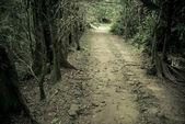 Mystery utat dobja az erdőben