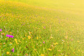 Květy na louce v slunečný den