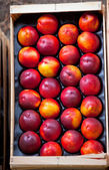 Fotografie Čerstvé nektarinky prodej na trhu