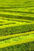 Francia kert zöld sövény labirintus
