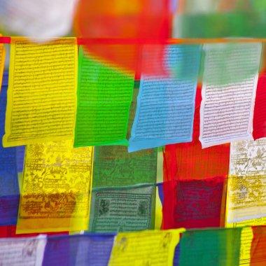 Buddhist praying flags in Lumbini