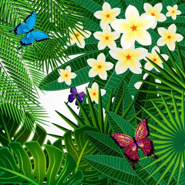 Floral design background. Plumeria flowers, tropical leaves and