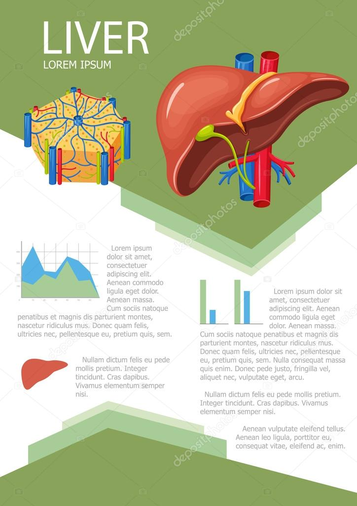 Human liver infographic — Stock Vector © nordfox #113020422